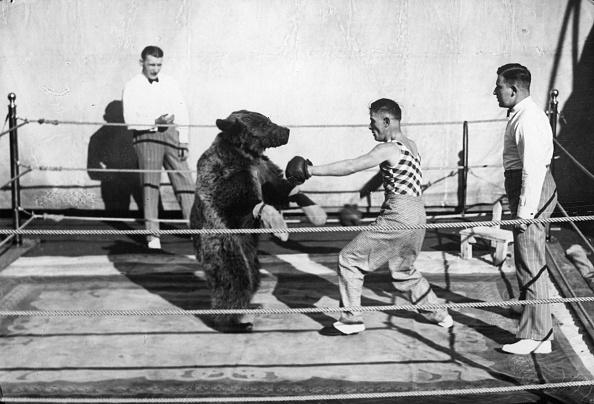 サーカス「Boxing Bear」:写真・画像(14)[壁紙.com]