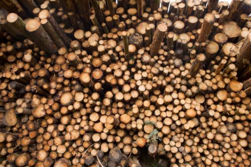 Deforestation「UK, Scotland, Perthshire, pine tree trunks」:スマホ壁紙(0)