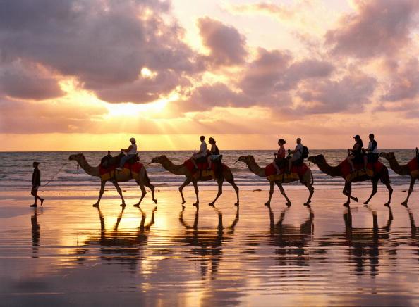 Riding「Camel Ride On The Beach」:写真・画像(14)[壁紙.com]