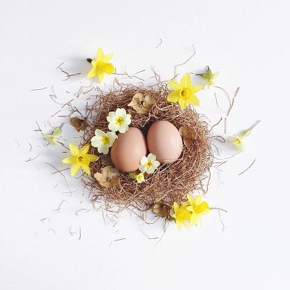 Animal Nest「Easter nest with eggs and spring flowers」:スマホ壁紙(19)