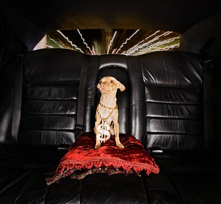 Respect「Hip-Hop Dog Riding in Limo」:スマホ壁紙(17)