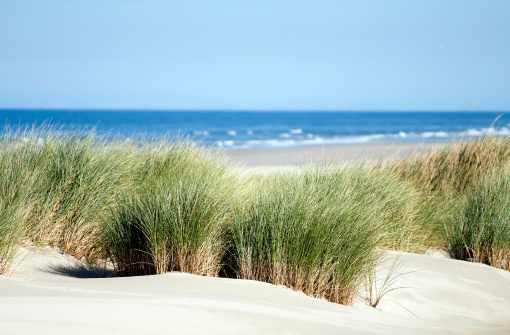 Coastline「Relaxing view of dunes, grass, beach and sea」:スマホ壁紙(11)