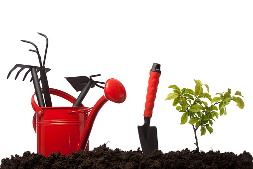 Planting「Gardening equipmnets in watering can on dirt, white background」:スマホ壁紙(11)
