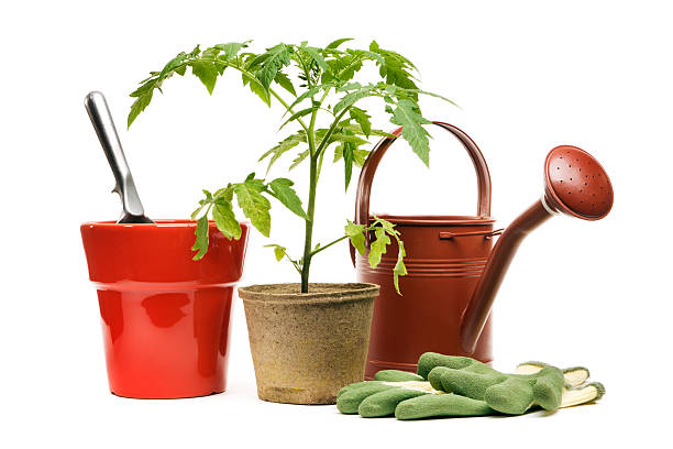 Gardening Equipment, Potted Plant, and Flower Pot, Isolated on White:スマホ壁紙(壁紙.com)