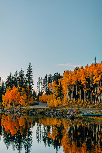 Aspen Tree「Sunset Shot of a Reflective Lake In the Fall Autumn Colors in the Grand Mesa National Forest In Beautiful Western Colorado」:スマホ壁紙(6)