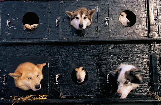 Dogsledding「Sled Dogs in Truck」:スマホ壁紙(8)