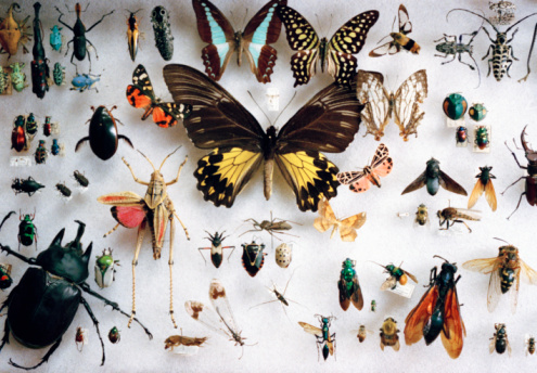 ガラス「preserved butterflies and other insects」:スマホ壁紙(12)