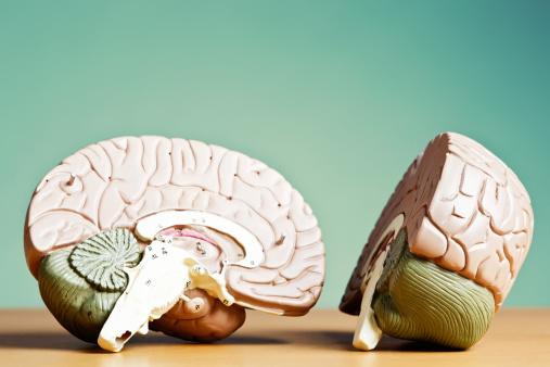 Uncertainty「What's on your mind? Model brain split in two」:スマホ壁紙(2)