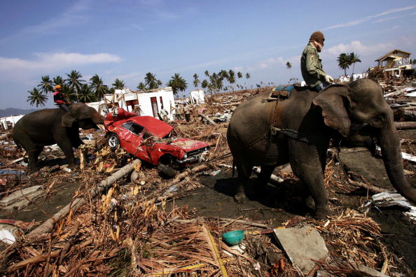 Damaged「Banda Aceh Struggles After Devastating Quake」:写真・画像(10)[壁紙.com]