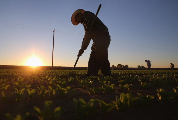Romaine Lettuce「Migrant Workers Farm Crops In Southern CA」:写真・画像(11)[壁紙.com]