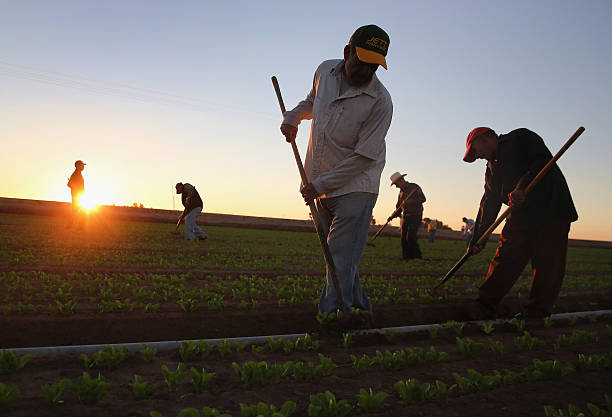Migrant Workers Farm Crops In Southern CA:ニュース(壁紙.com)