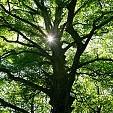 パンポンの森壁紙の画像(壁紙.com)