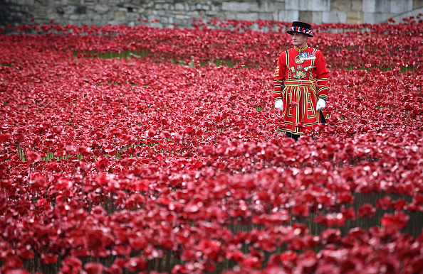 Poppy - Plant「Final Poppy Planted At The Tower Of London To Mark Armistice Day」:写真・画像(6)[壁紙.com]