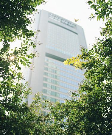 日本「バタフライ横の木、超高層ビルを背景にした、低角度のビュー」:スマホ壁紙(16)