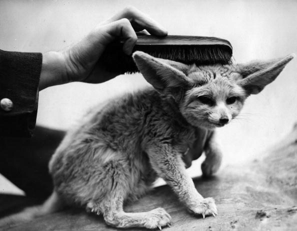 Toilet「Fox Brush」:写真・画像(17)[壁紙.com]