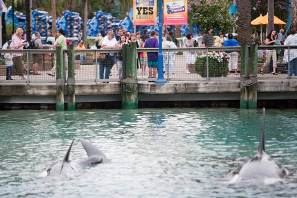 Killer Whale「Killer Whale Kills Trainer Before Show At SeaWorld」:写真・画像(2)[壁紙.com]