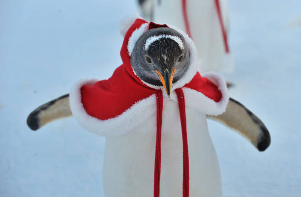 Christmas「Penguins Dress Up For Christmas At Harbin Polarland」:写真・画像(1)[壁紙.com]