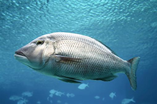 Queensland「Swimming Fish Close-Up」:スマホ壁紙(4)