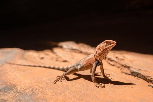 Dragon「Karijini National Park, Western Australia, Australia」:スマホ壁紙(5)