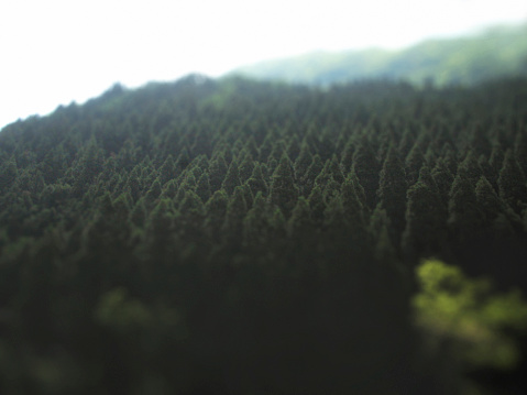 Lush Foliage「evergreen tree forest near Toyama Japan」:スマホ壁紙(15)