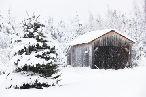 Adirondack Mountains「Evergreen Tree and Old Rural Garage in Winter Snow Blizzard」:スマホ壁紙(11)