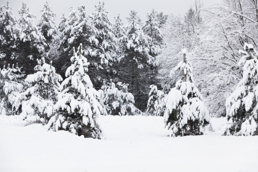 Adirondack Mountains「Evergreen Trees Surrounding a Small Clearing in Heavy Blizzard Snow」:スマホ壁紙(1)