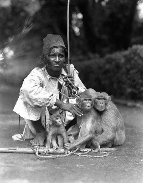 Charles Phelps Cushing「Performing monkeys」:写真・画像(12)[壁紙.com]