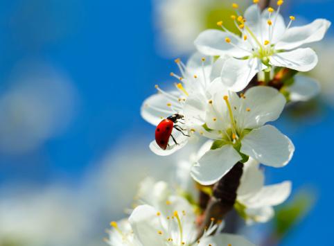 Ladybug「Ladybug」:スマホ壁紙(9)