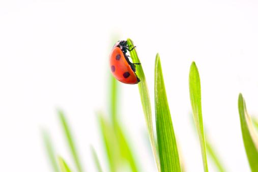 Ladybug「Ladybug」:スマホ壁紙(18)