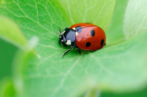 Ladybug「Ladybug」:スマホ壁紙(3)