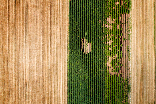 Field Stubble「Harvested wheat fields and vegetable cultivation, aerial view」:スマホ壁紙(7)