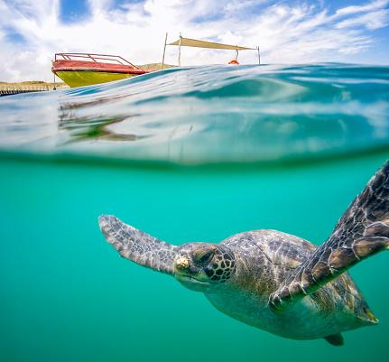 Water Surface「Green Sea Turtle」:スマホ壁紙(2)