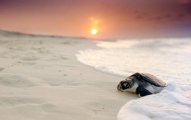 Green sea turtle (Chelonia mydas):スマホ壁紙(壁紙.com)