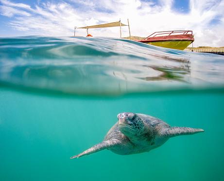 Water Surface「Green Sea Turtle In Tropical Waters」:スマホ壁紙(8)