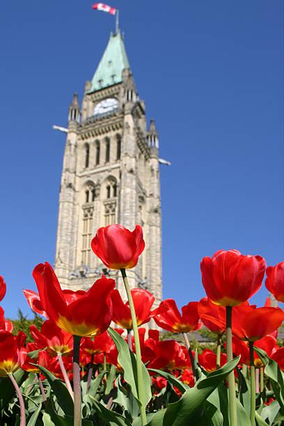 Parliament Tulips - 01:スマホ壁紙(壁紙.com)
