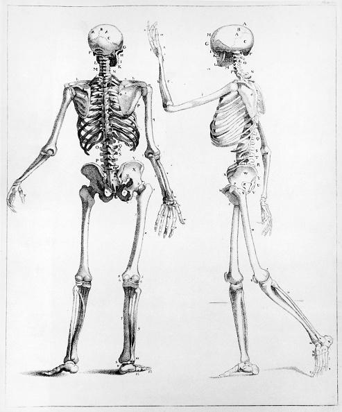 Side View「Human Skeletons」:写真・画像(19)[壁紙.com]