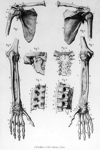 Biology「Human Bones」:写真・画像(9)[壁紙.com]