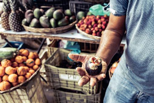 Homegrown Produce「brazilian farmer holding mangosteen fruit in his hand」:スマホ壁紙(19)
