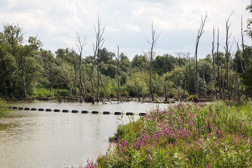 花「Restored tidal creek with drowned trees in Dutch Biesbosch National Park」:スマホ壁紙(1)