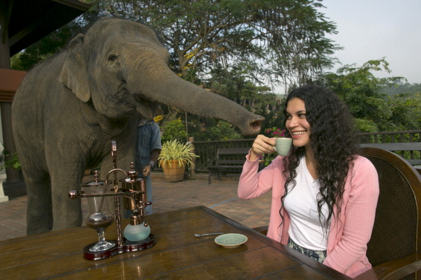 Coffee Crop「Elephant Dung Coffee Produces The World's Most Expensive Cup」:写真・画像(6)[壁紙.com]