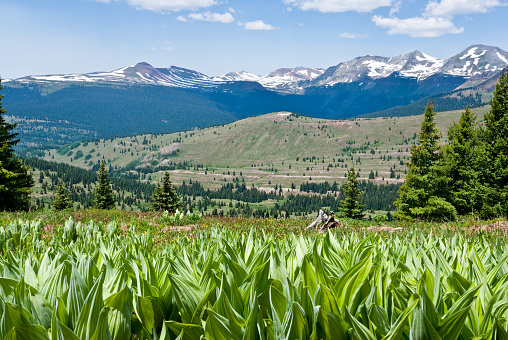 San Juan Mountains「Meadow of False Hellebore and the San Juan Mountain Range」:スマホ壁紙(18)