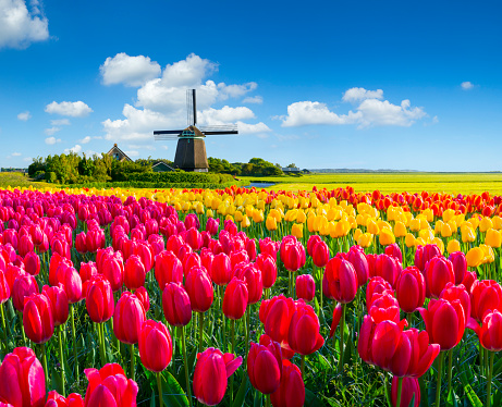 Netherlands「Dutch Spring Scene」:スマホ壁紙(17)
