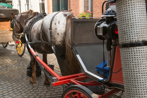 Horse-drawn carriage「Horse-drawn carriage in Bruges, Belgium」:スマホ壁紙(10)