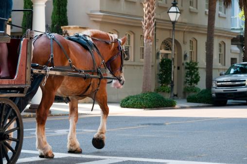 Horse-drawn carriage「馬車で、サウスカロライナ州チャールストン。」:スマホ壁紙(6)