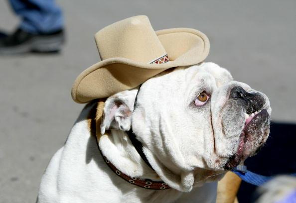 Hat「Pet Owners In San Francisco Celebrate Pet Pride Day」:写真・画像(15)[壁紙.com]