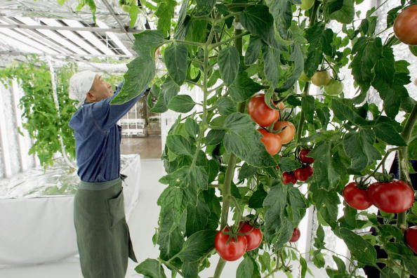 Greenhouse「Basement Greenhouse Introduces City Dwellers To Farming」:写真・画像(19)[壁紙.com]