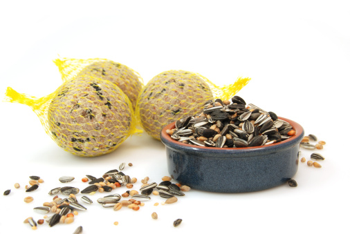 Bird Seed「Bird food」:スマホ壁紙(2)