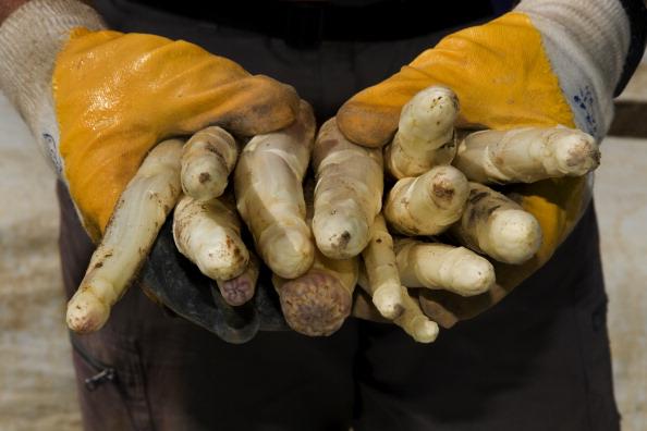 Asparagus「Bruschal, Germany」:写真・画像(13)[壁紙.com]