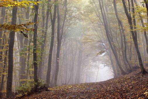 ウィーンの森「Europa, Austria, Wien, Wienerwald, Weg durch den Herbstwald」:スマホ壁紙(0)