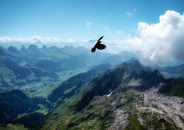 Bird of prey flying above Santis mountain, Schwende, Switzerland:スマホ壁紙(壁紙.com)